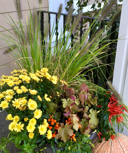 fall-container-with-heuchera