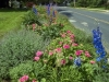 delphiniums and zinnias