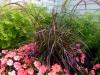 pennisetum rubrum and impatiens